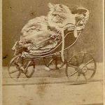Котик в коляске