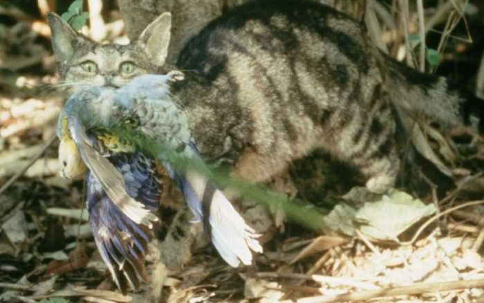 Кошки убивают животных