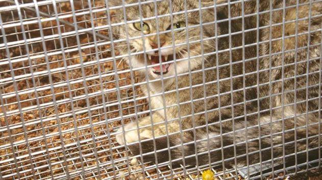 Пойманная кошка