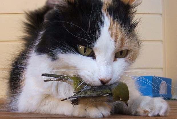 Котик-убийца