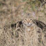 Котики в дикой природе