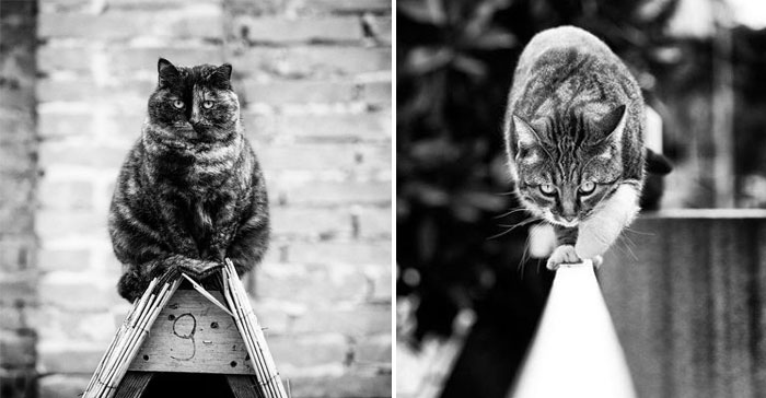 Коты-монорельсы