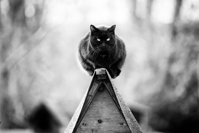 Черный кот на коньке