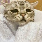 Луху и полотенце