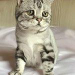 Котенок Луху