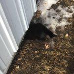 Уличная кошка