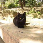 Кошечка на улице