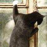 Слинки стучит в окно