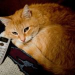 Кот умеющий звонить по телефону
