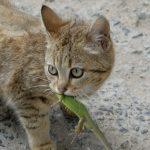 Котенок поймал рептилию