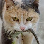 Кошка держит в зубах ящерицу