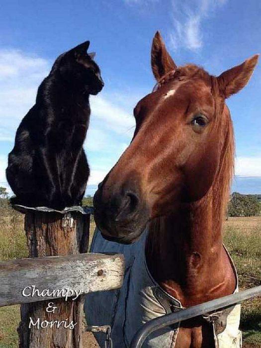 Котик и его друг